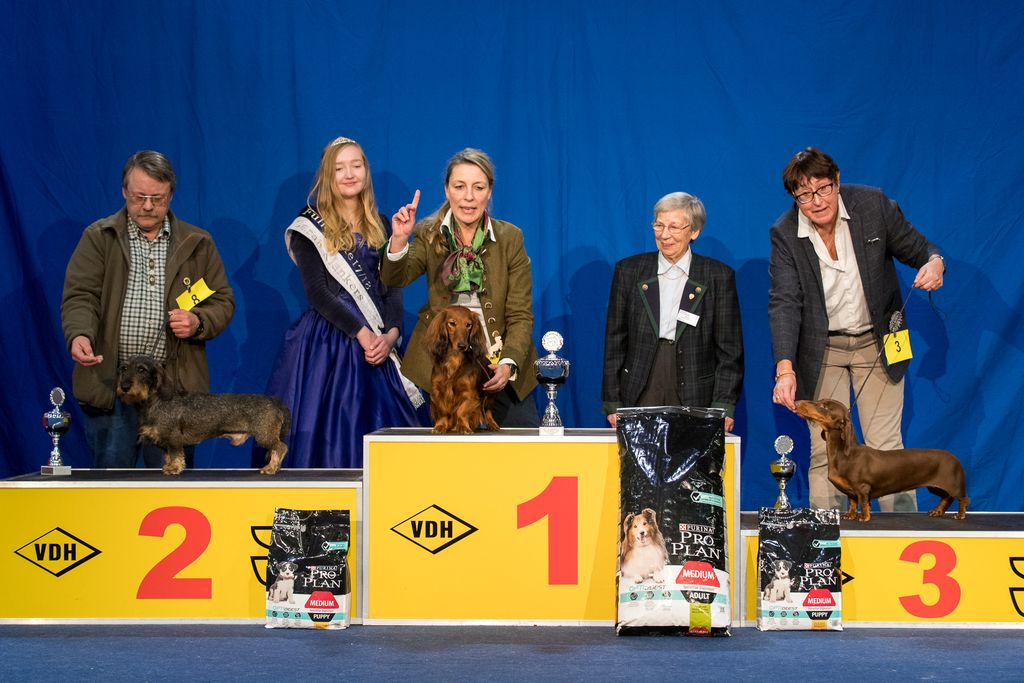 Internationaler Sieger FCI Gruppe 4