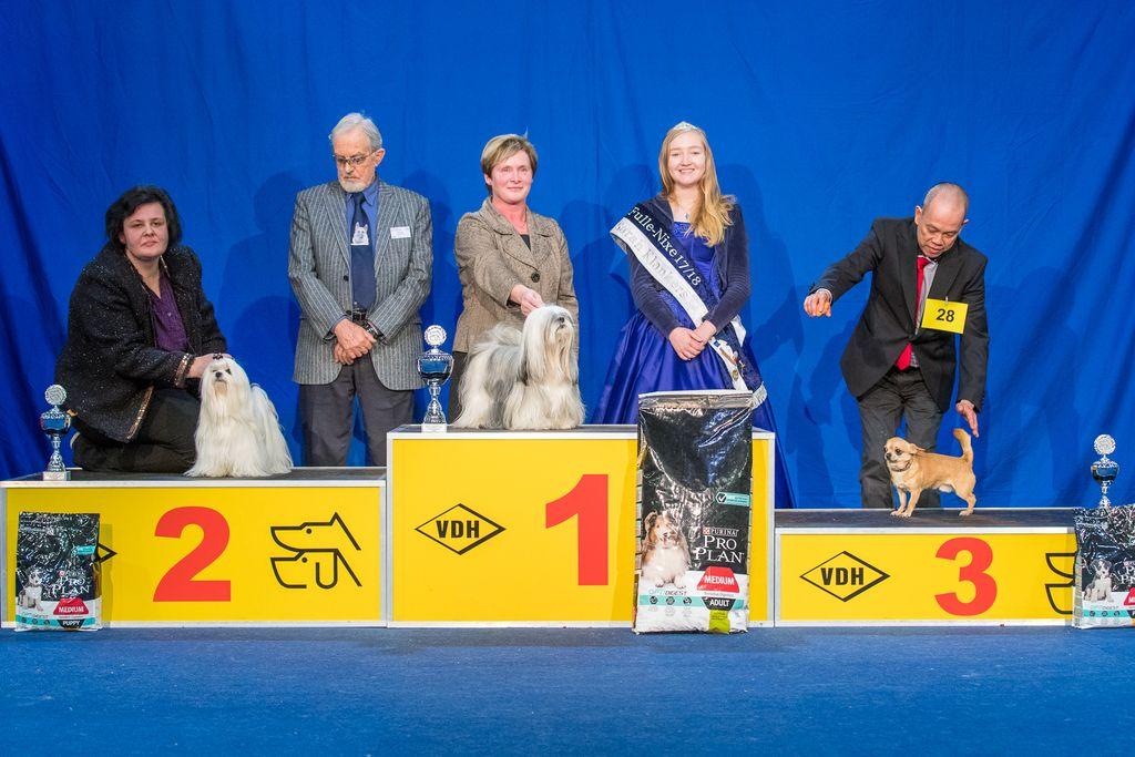 Internationaler Sieger FCI Gruppe 9