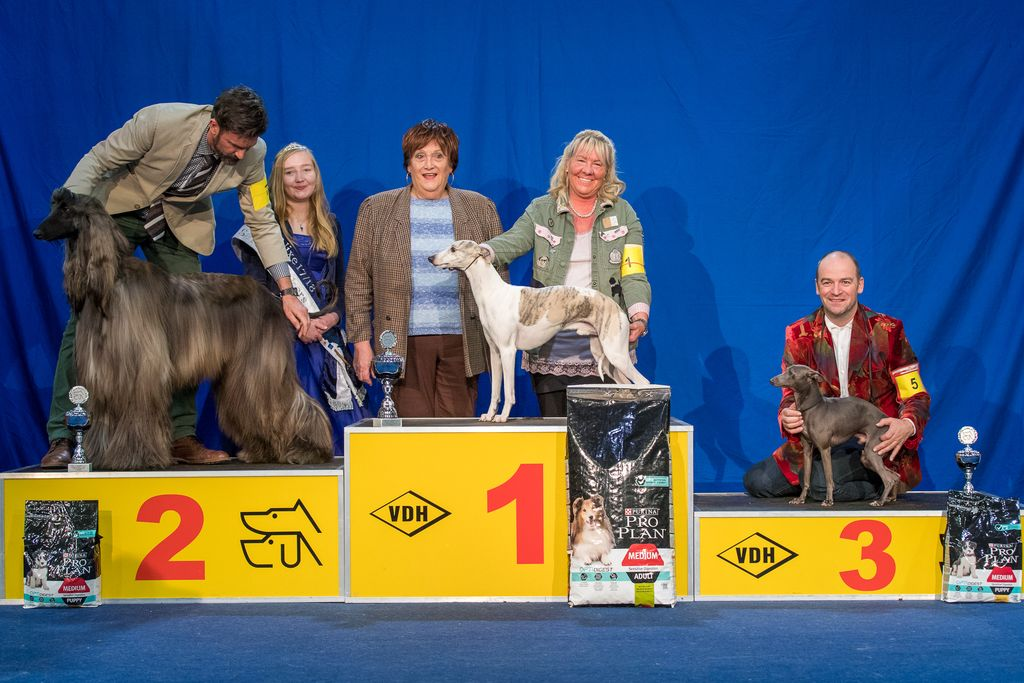 Internationaler Sieger FCI Gruppe 10