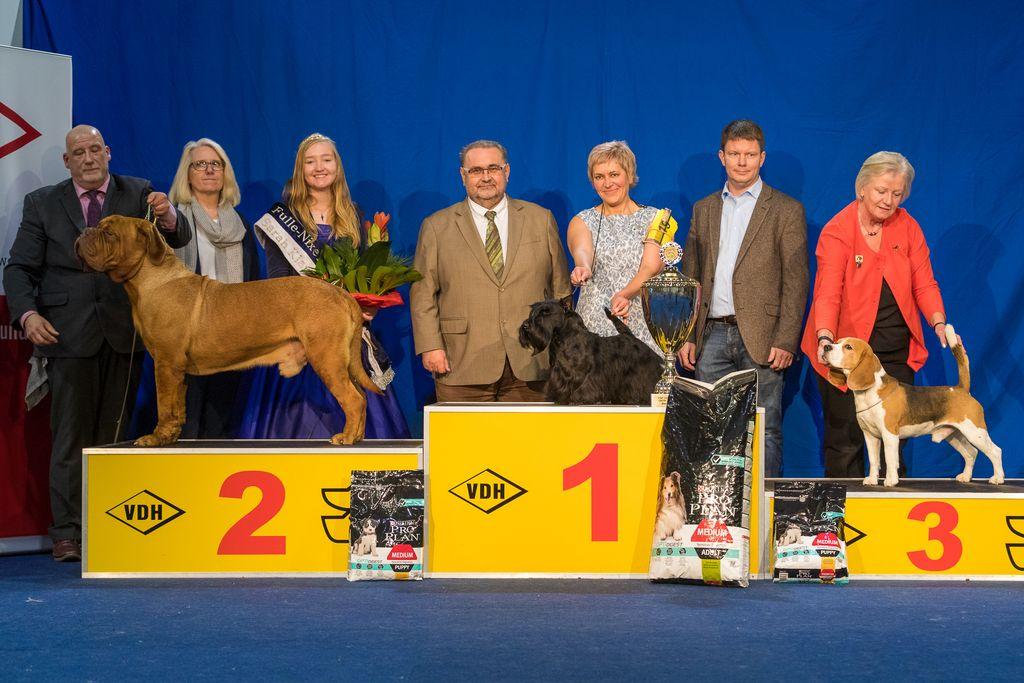 Internationaler Sieger Kassel