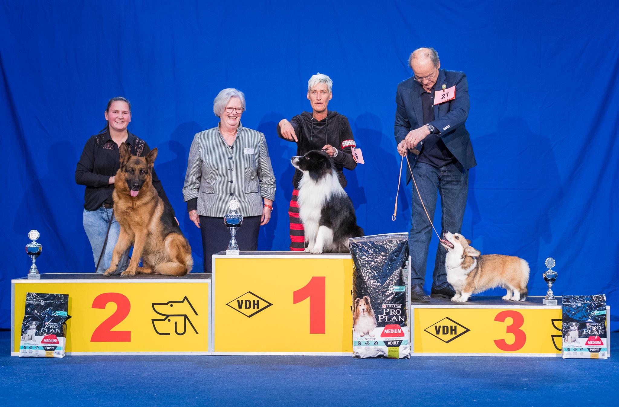 Nationaler Sieger FCI Gruppe 1